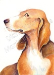 ACEO Basset Hound - My Best Side