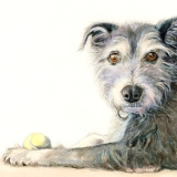 Pet portrait commission painting by artist illustrator Diane Young
