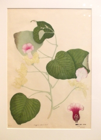 Botanical Painting RAMM