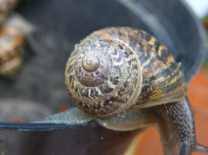Snail shell pattern