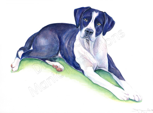 Pet Portrait commission painting by artist Diane Young of Manic Illustrations