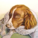 Pet portrait commission painting of a Springer Spaniel by artist Diane Young