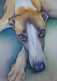 Whippet Commission