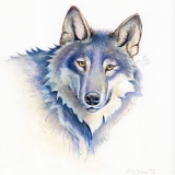 Painting of a wolf portrait by artist Diane Young