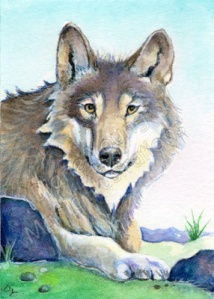 ACEO painting of a wolf by artist illustrator Diane Young of Manic Illustrations