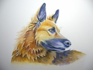 Belgian shepherd dog portrait painting by Diane Young