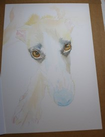 Whippet painting work in progress by animal and pet portrait dog artist Diane Young