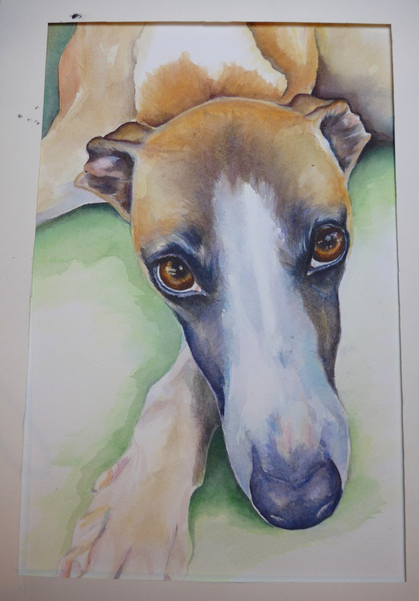 Unfinished Whippet painting Pet Portait Dog Work In Progress by artist Diane Young