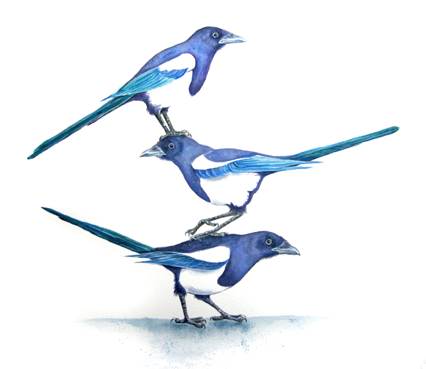Painting of 3 Magpies by artist Diane Young