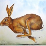 Painting of a running Hare by animal artist Diane Young Stroud