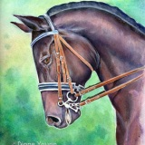 Horse head dressage painting by artist Diane Young Manic Illustrations in Stroud