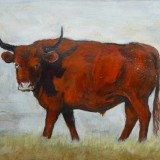 Painting of a bull at Minchinhampton Stroud by artist Diane Young
