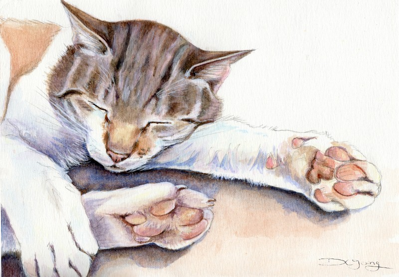 Painting of a Tabby Cat by Artist Diane Young Pet Portraits and animal art