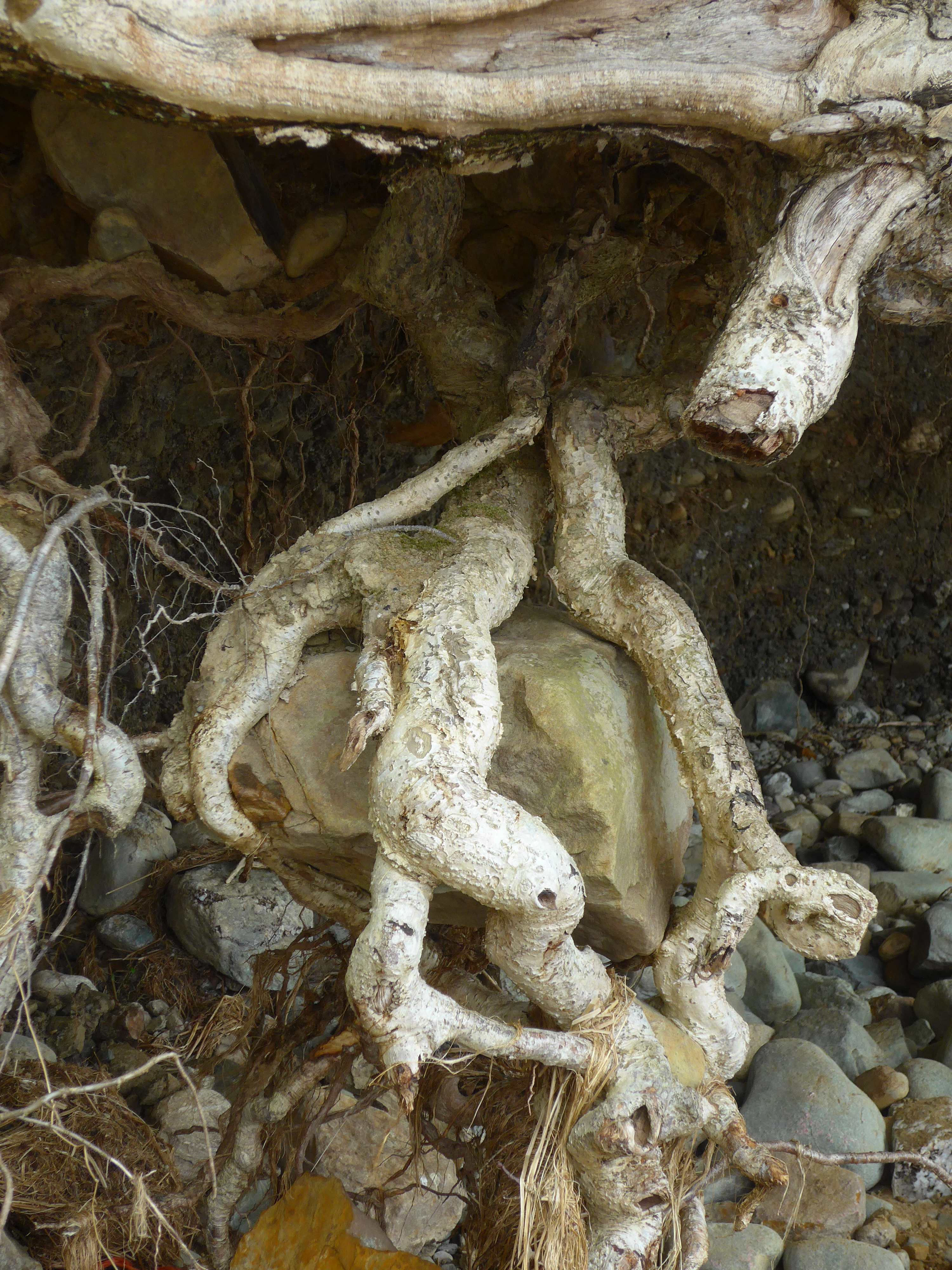 Nature rock inside a tree photography by artist Diane Young Stroud