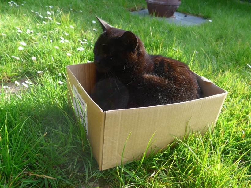 Cat in a Box in the garden happy as can be photograph by artist Diane Young