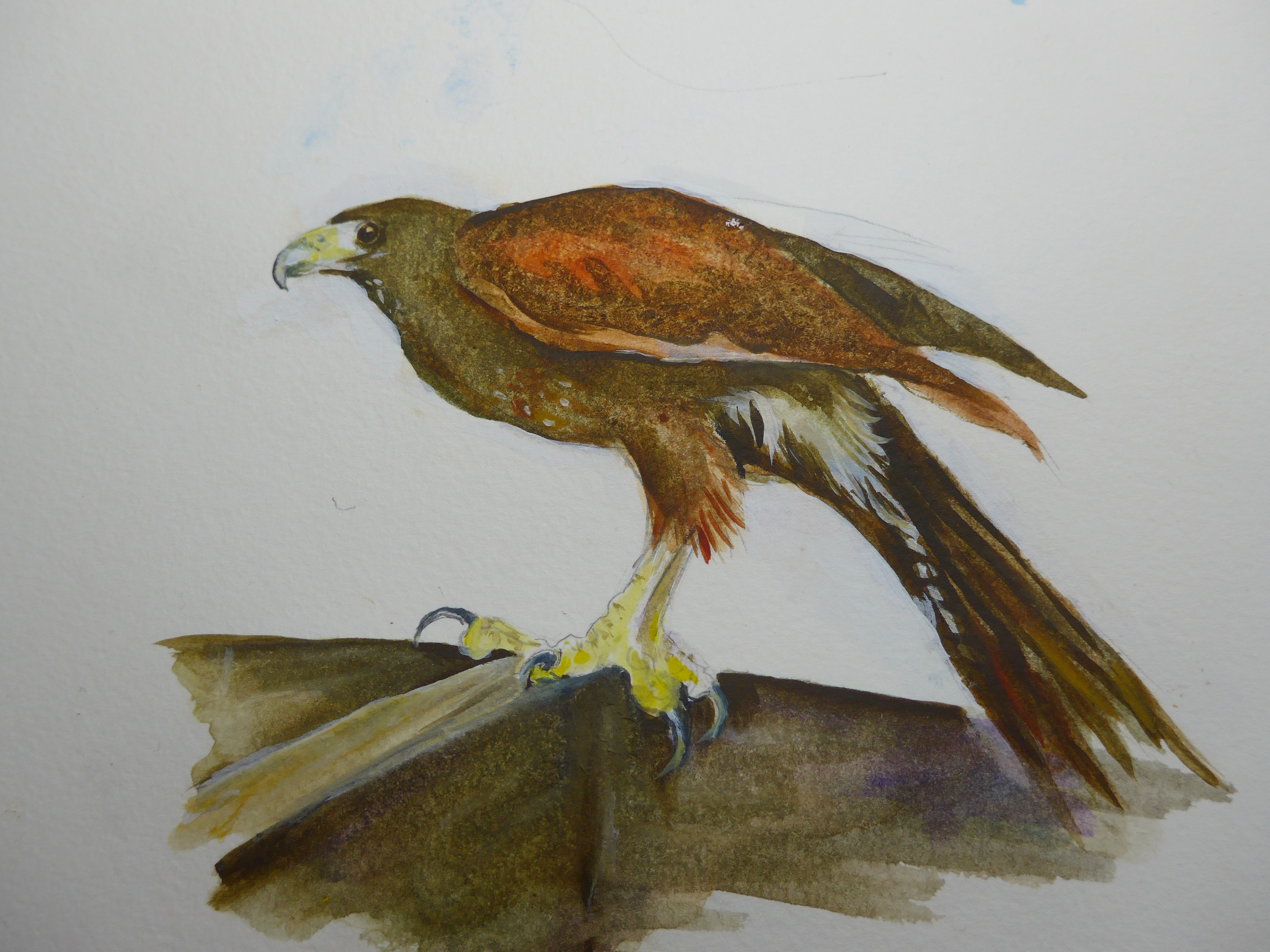 Textural Painting of a Harriers Hawk by artist Diane Young of Manic Illustrations Stroud