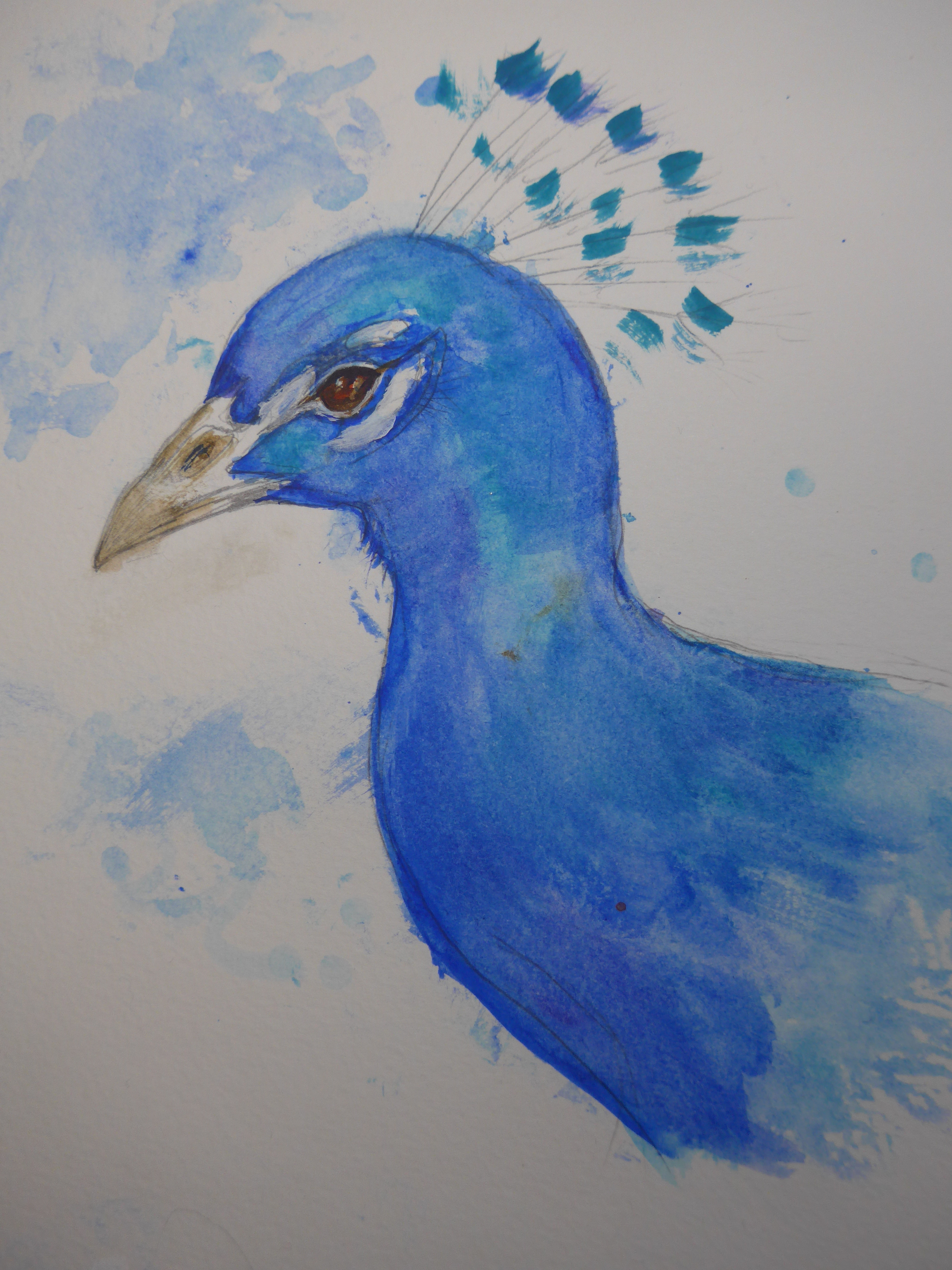Sketch Painting of a peacock by artist Diane Young
