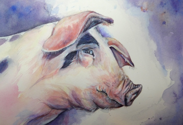 Painting of a Gloucester Old Spot Pig by Diane Young of Manic Illustrations