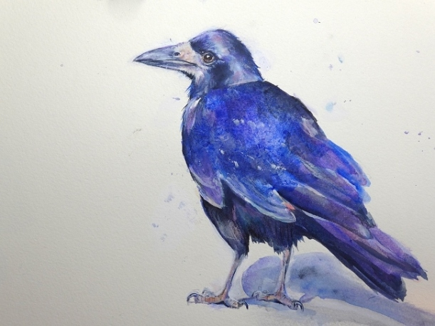 Painting of a Rook by artist Diane Young of Stroud at Manic Illustrations