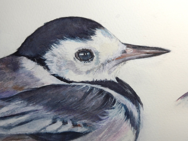pied-wagtail-paint-2