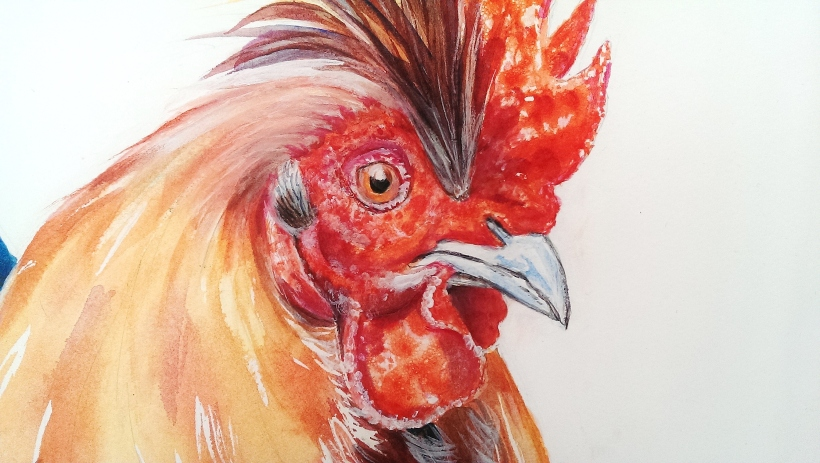 Diane Young post about finishing a painting of a Rooster or Cockerel