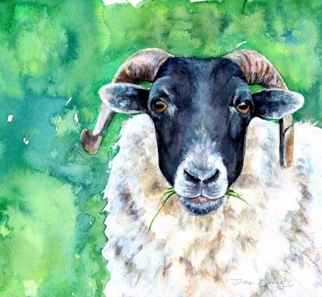 Painting of a horned sheep from Scotland by Artist Diane Young