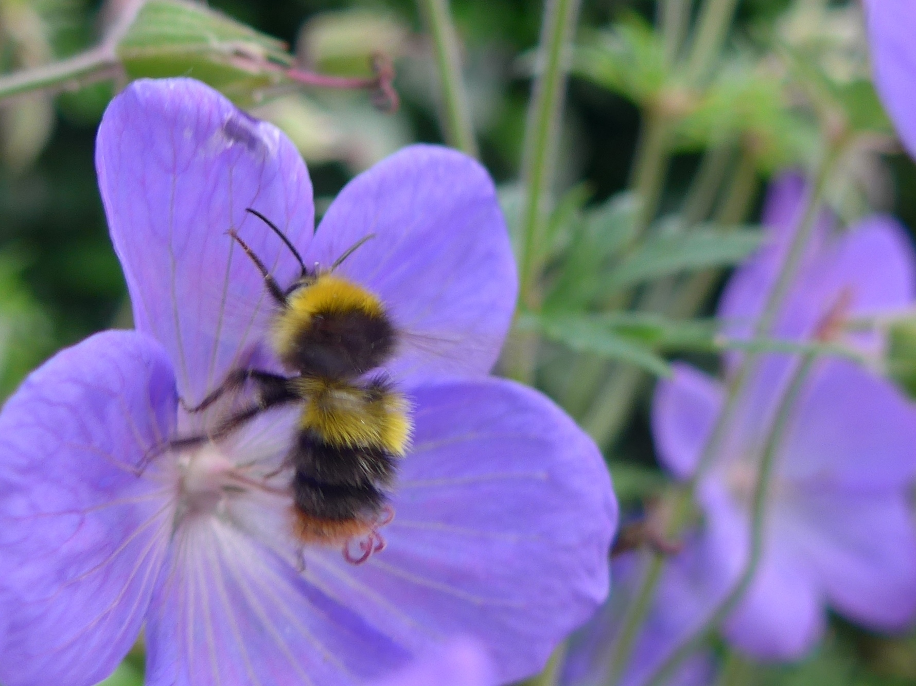 Bee Detail Photo by artist Diane Young