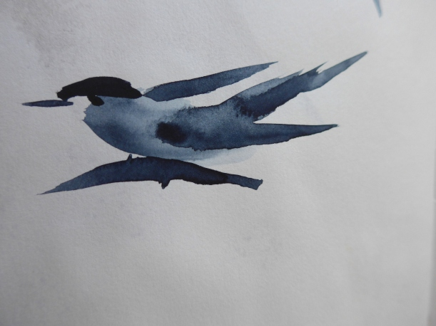 Painting of a Tern with a Chinese Brush by artist Diane Young
