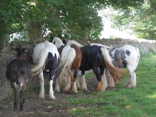 Ponies Minch Common June 17 (44)