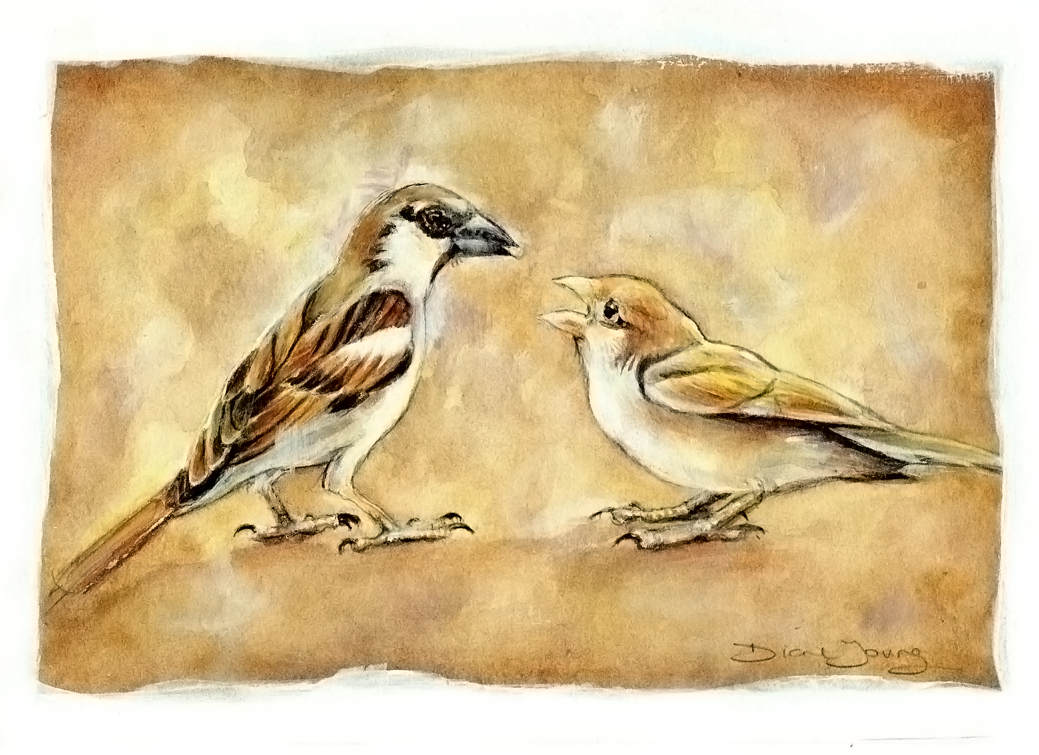 Sparrows for wweb