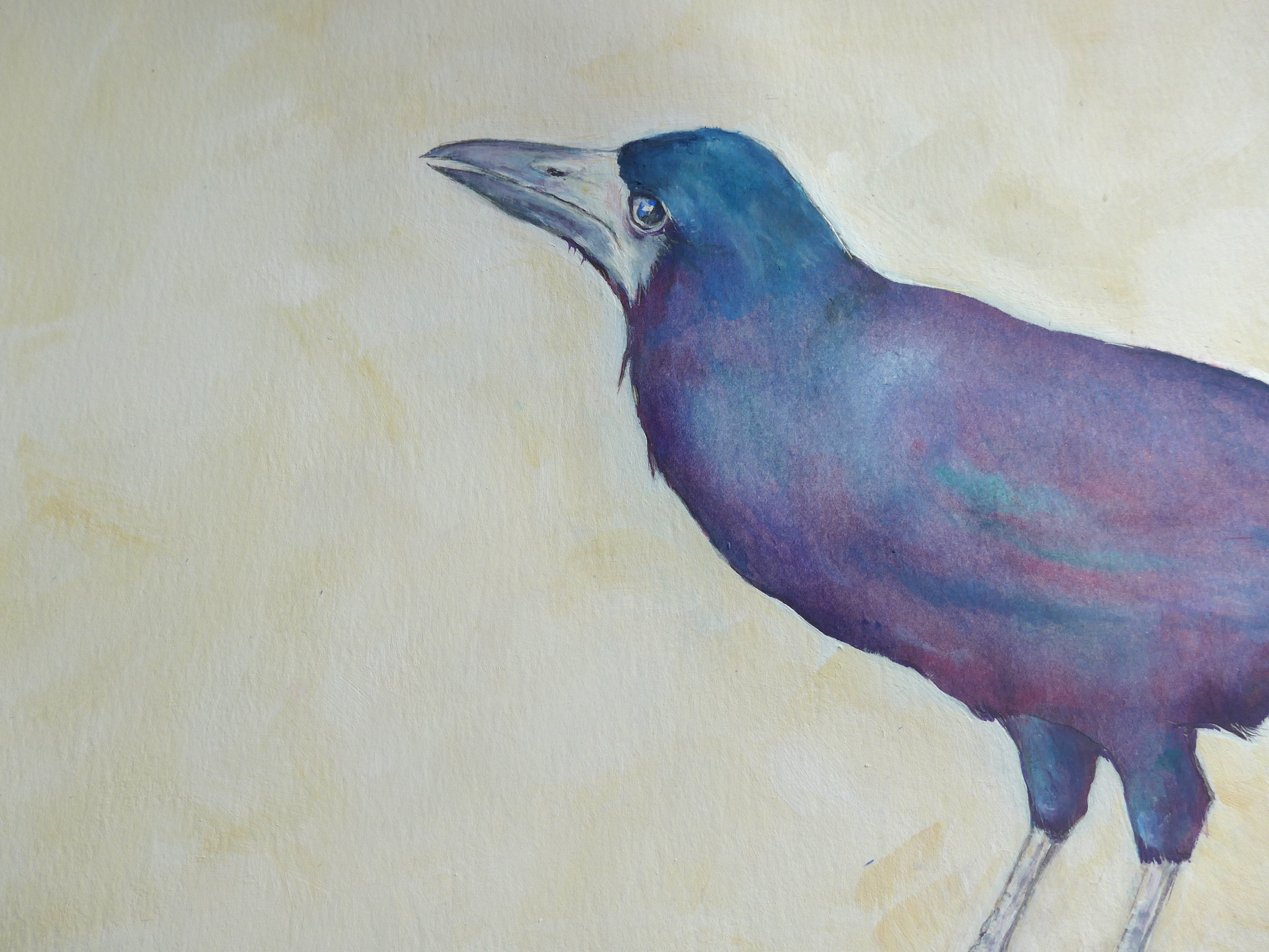 Painting of a Dartmoor Rook by bird and animal artist Diane Young