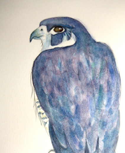 Painting of a Peregrine Falcon By Diane Young