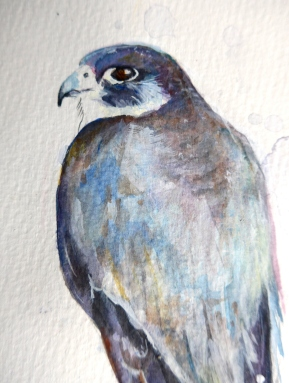 Sketch Painting of a Peregrine Falcon by artist Diane Young