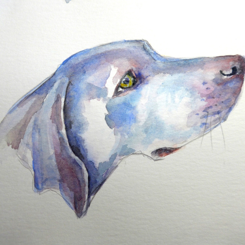 Loose painting of the head of a Weimeraner dog by Diane Young