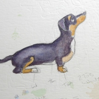 Quick sketch painting of a dachshund dog by artist Diane young