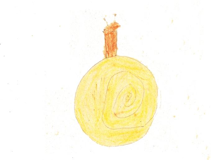 Snail Sketch593