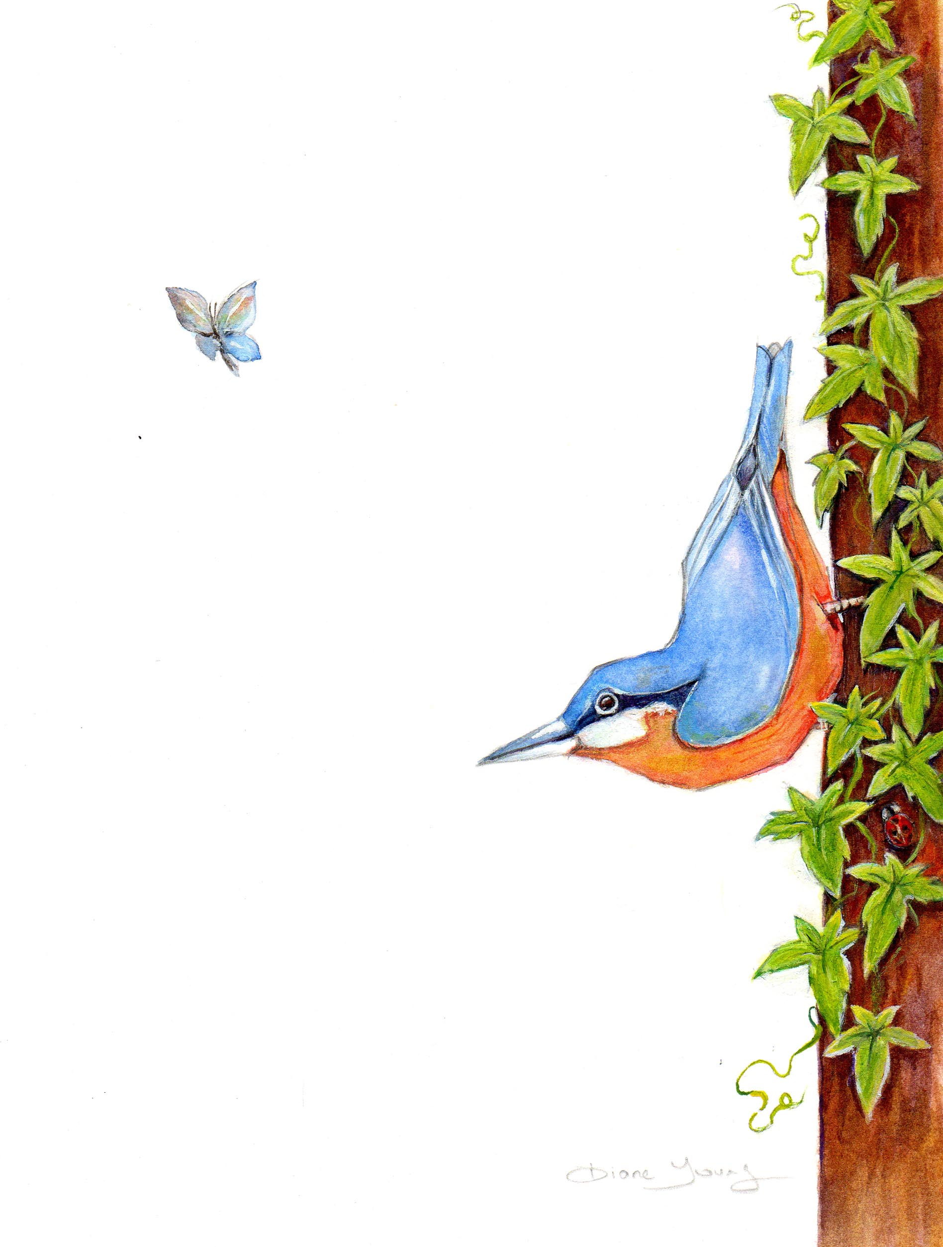 Painting of a Nuthatch bird with moth by artist Diane Young Stroud