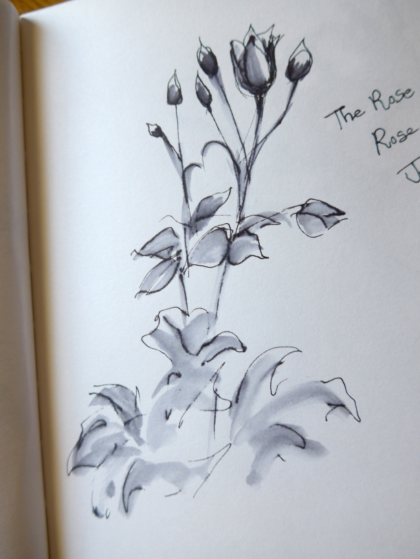 Sketch in ink of roses by artist Diane Young flowers