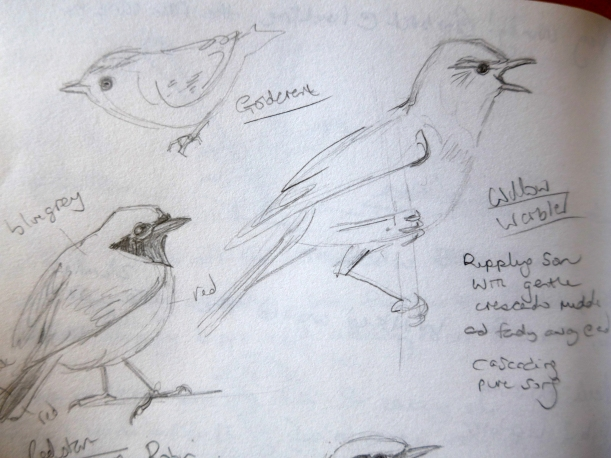 Sketches of birds seen by artist Diane Young