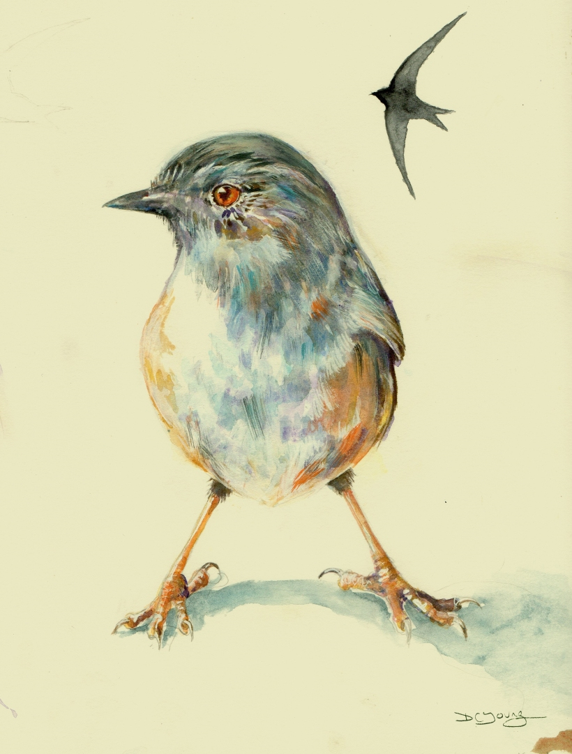 Dunnock bird Painting by artist Diane Young
