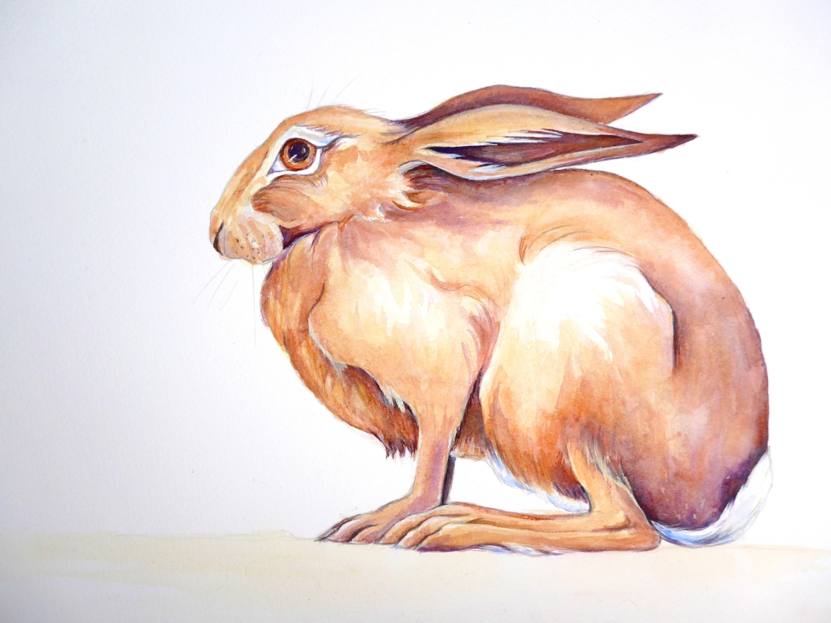 Painting of a hare for the EGLR event in Stonehouse.