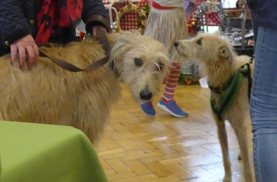 Dogs at a Christmas Fayre