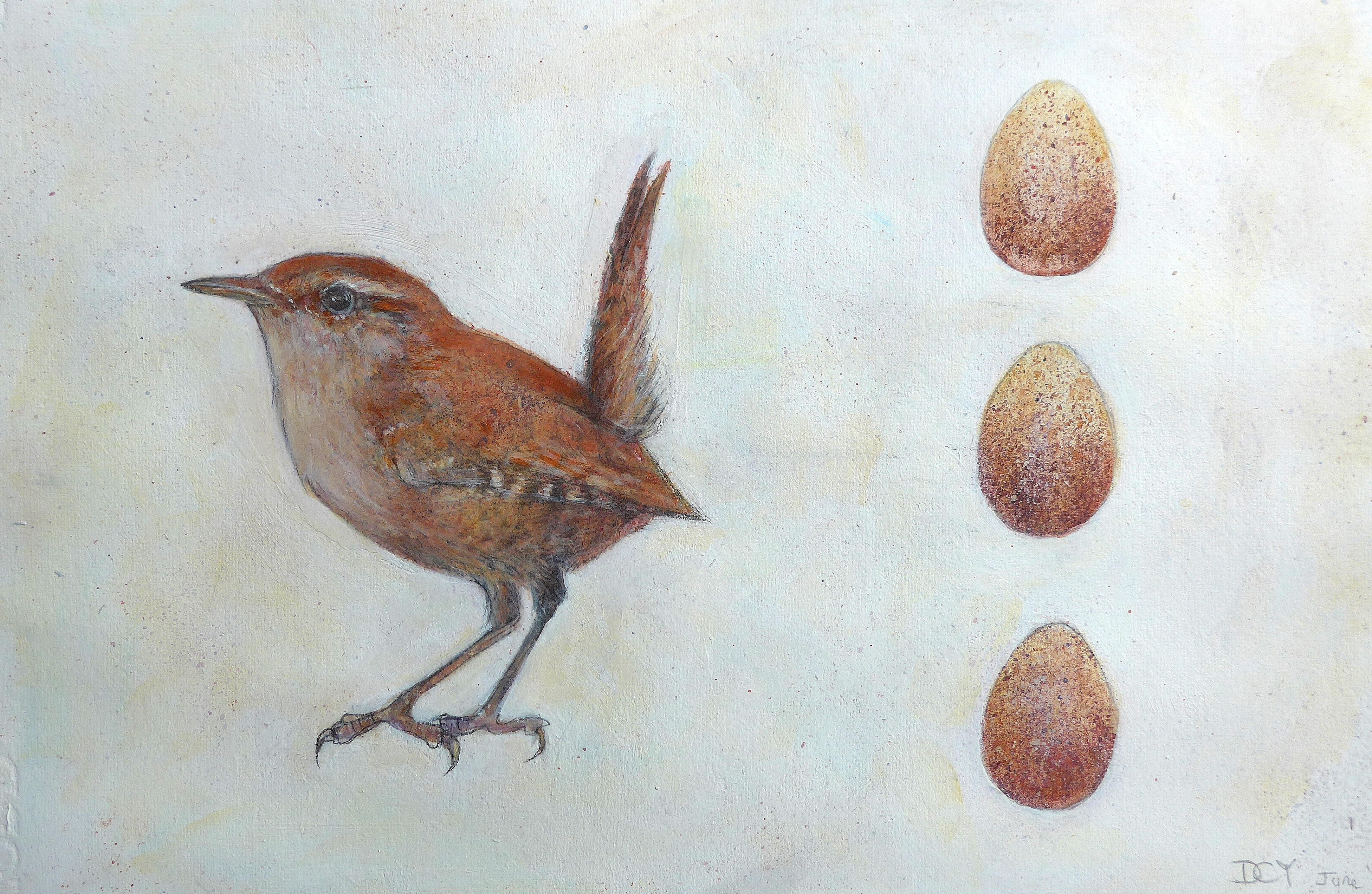 Painting showing painting of a wren and three eggs by artist Diane Young