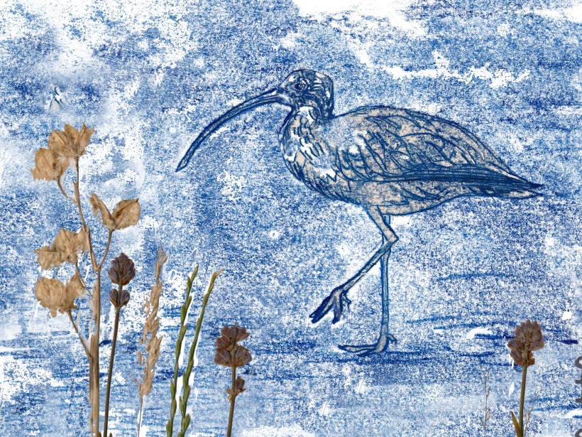 A collograph print of a Curlew set against dried flowers artist Diane Young