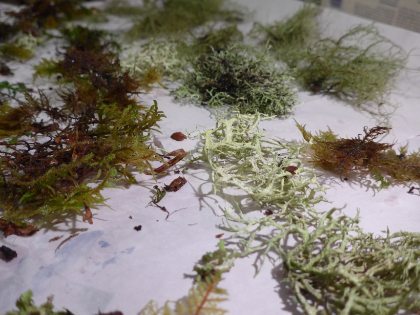 Photo of moss and lichen sent from Scotland to the Cotswolds for Diane Young ARtist in Stroud