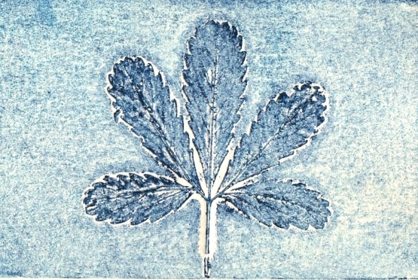 Collagraph Print made using a leaf and prussian blue by artist Diane Young