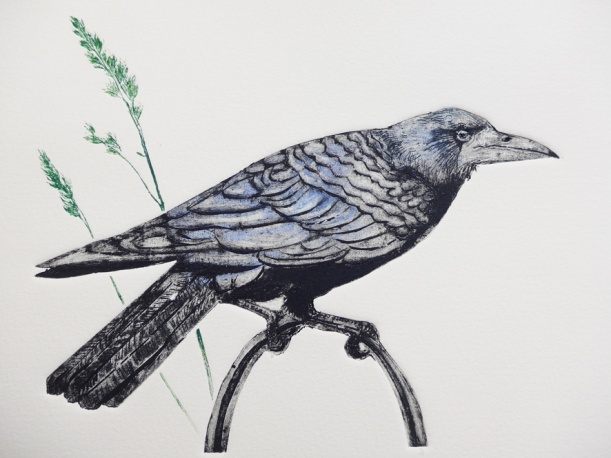 Collagraph print of a rook in detail with grasses by artist printmaker diane young of stroud